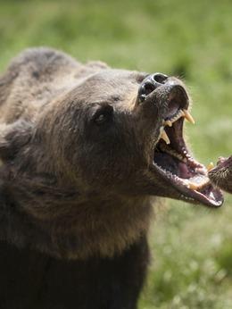 野熊(饰演)