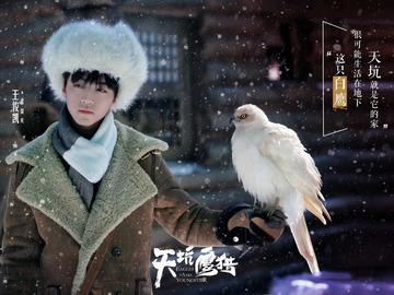 天坑鹰猎 郑凯