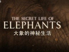 BBC之大象的秘密生活