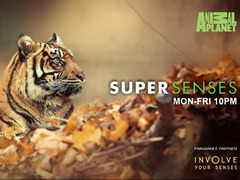 Animal Super Senses