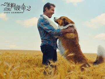 一条狗的旅程 刘宪华