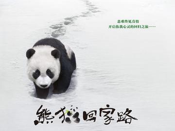 熊猫回家路 张琪