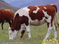 愛上內蒙古